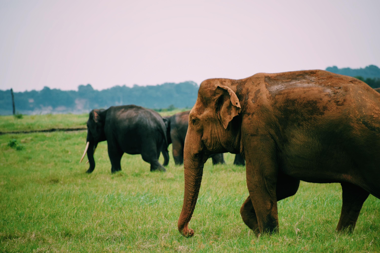 Kaudulla National Park / Polonnaruwa / Sri Lanka